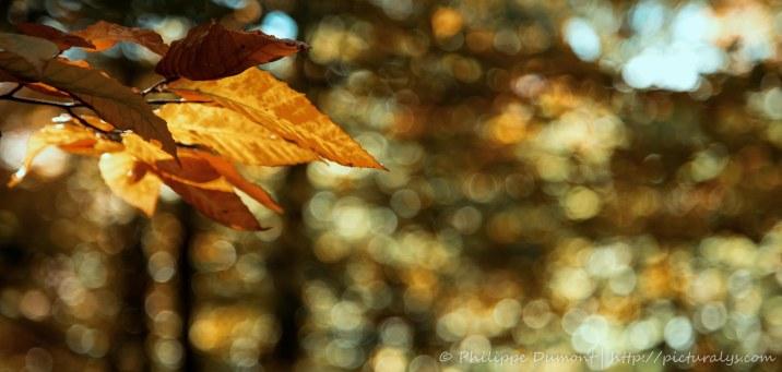 Bokeh d'automne
