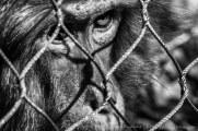Le prisonnier #01