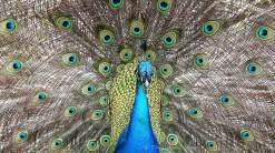 L'oiseau aux multiples yeux