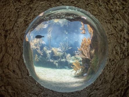 L'aquarium à XCaret