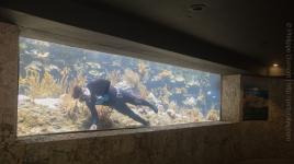 Aquarium à XCaret